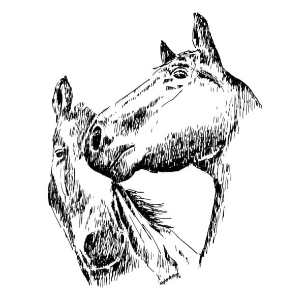 Desenho - Namoro - Quadro decorativo - Cavalos