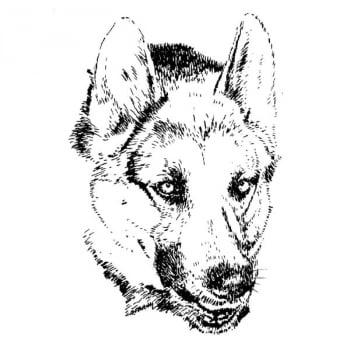 Desenho - Cão Pastor - Quadro decorativo