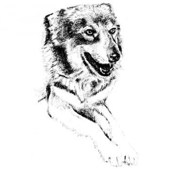 Desenho - Companheiro - Quadro decorativo - Cachorro