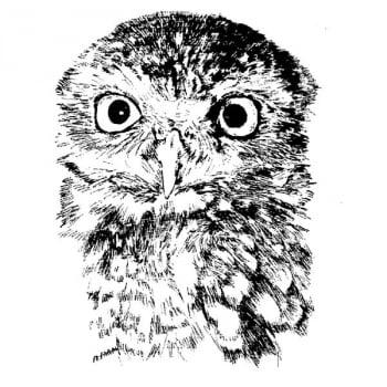 Desenho - Coruja - Quadro decorativo