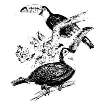 Desenho - Tucanos - Quadro decorativo